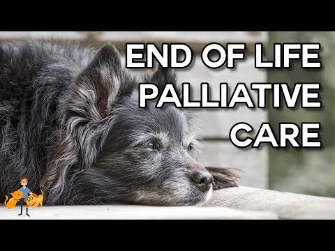 Before Euthanasia: palliative care for dogs and cats