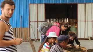 Laos Tea: команда мечты в деле переборки чая