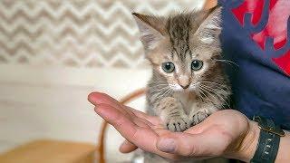 Котята жалеют свою больную сестру Судороги и гидроцефалия у котенка