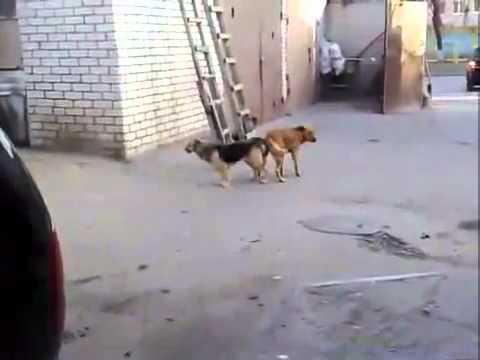 Отпугиватель собак в действии ультразвуковой отпугиватель грызунов, насекомых, крыс, мышей в екатеринбурге