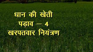 Dhan Ki Kheti | धान की खेती | Paddy Farming - Stage 4