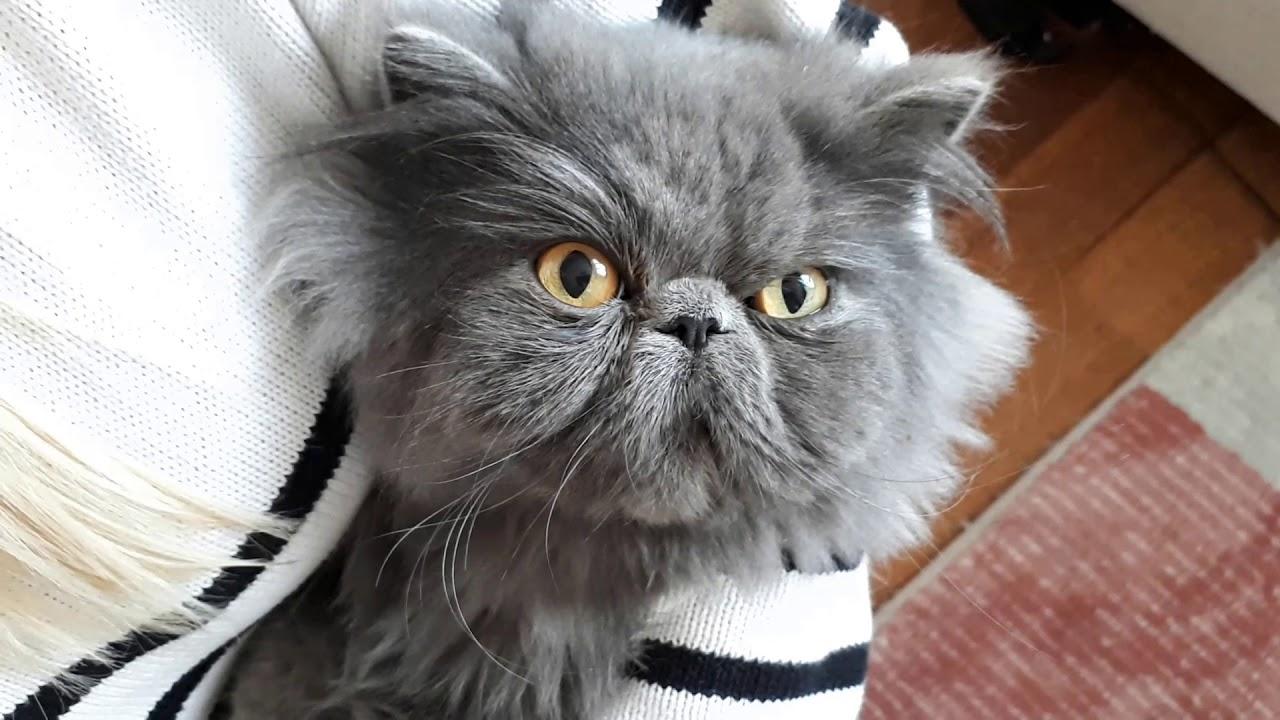 Kedilerde Göz Temizliği