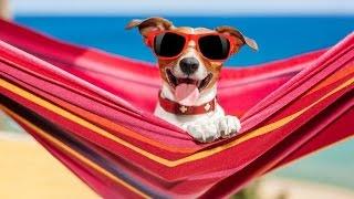 10 полезных товаров для собак с Алиэкспресс / Полезные вещи с Алиэкспресс