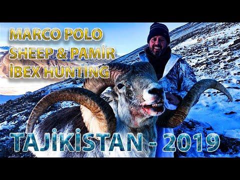 Marco Polo Sheep And Pamir Ibex Hunt, Tajikistan 2019