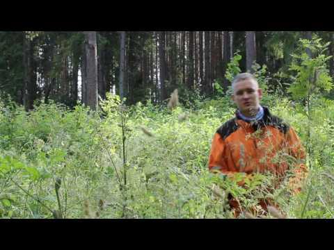 Metsakasvatuse ABC (Lankide hooldamine)