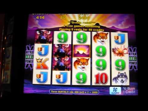 BUFFALO Slot Machine Free Spins Bonus Round Win - 동영상
