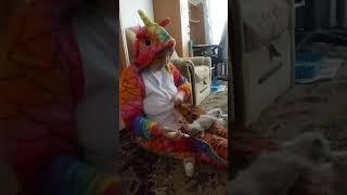ПРОДАЖА котята RagDoll Кошка-кукла