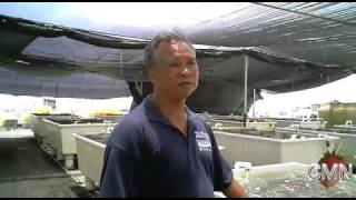 Quick Bites Hawaii: Big Island Abalone Farm