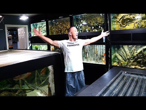 The king of DIY FISH ROOM TOUR! | The King of DIY