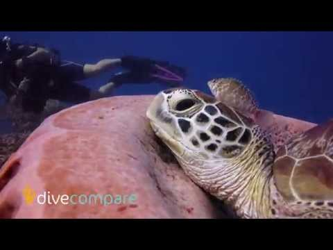 Scuba Diving the Gili Islands, Indonesia | Dive Compare