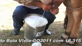recordista em leite endivia.f4v