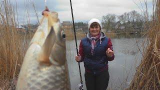 Рыбалка 2020 Ловля карася весной на реке My fishing