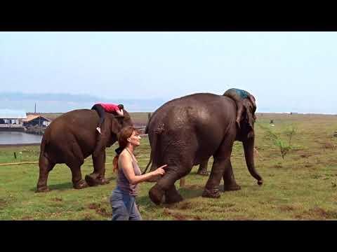 """( 3ème partie) """"L'APPEL DES ELEPHANTS, vos témoignages"""""""