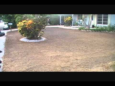 LANDSCAPE CONNECTION INSTALLS FLORATAM & ZOYSIA SOD