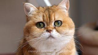 0 - 100 Cat Years