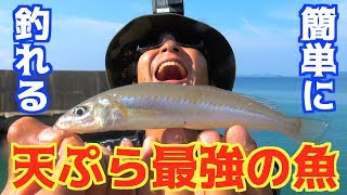 誰でも簡単に釣れて美味しいキスを沢山釣ろう! thumbnail