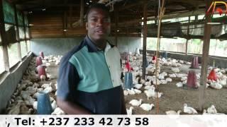 Buzz : les millionnaires d'aujourd'hui et de demain 2 : Cameroun
