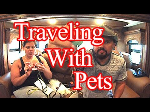RV - Traveling With Your Pets, Tips And Tricks!