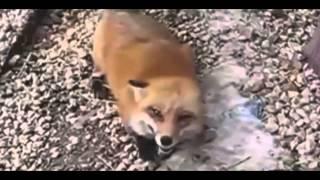 Приколы смех животных /TRE GADA