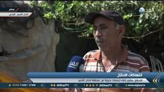 مراسل «الغد» يرصد رفض بدو الخان الأحمر لسياسات إسرائيل الاستيطانية