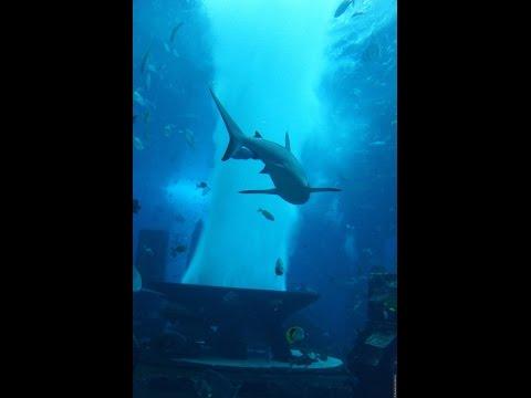 Аквариум в Дубай Молле, ОАЭ/The aquarium at the Dubai Mall, UAE