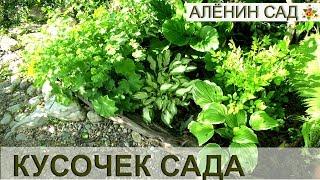 Как обустроить тенистый уголок сада / Теневыносливые растения
