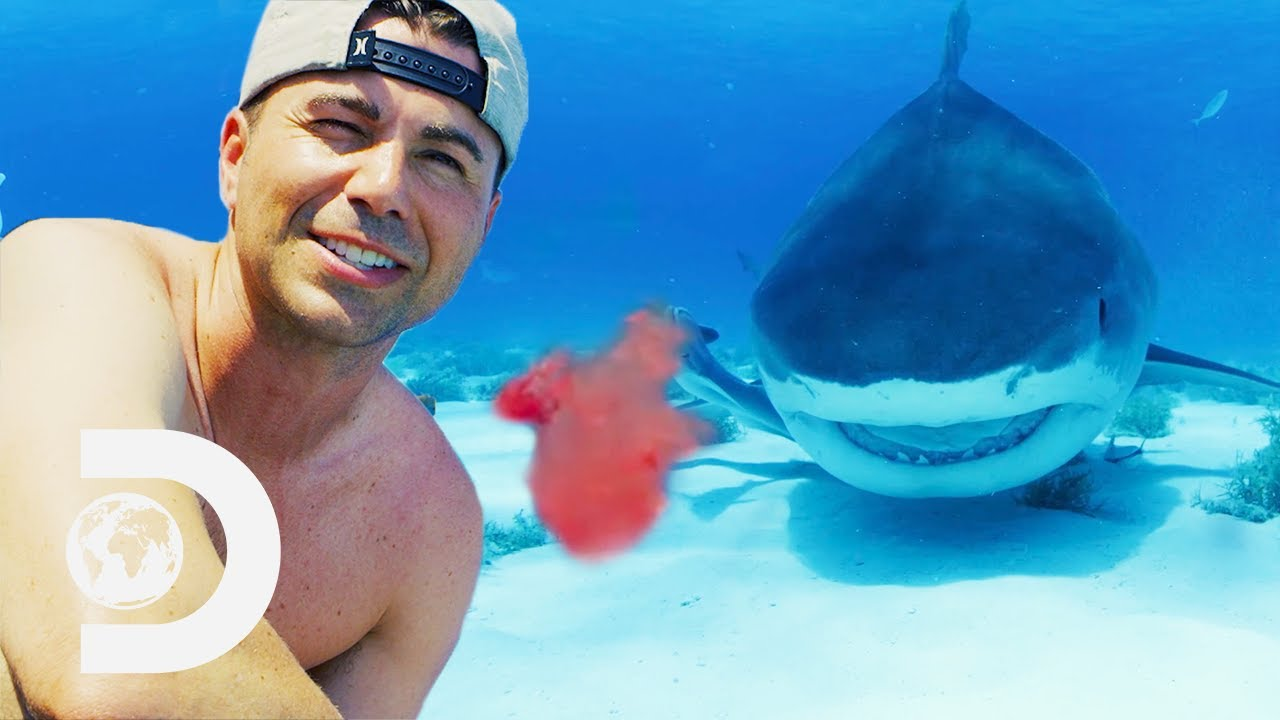 Does Blood Drive Sharks Wild? | Shark Week