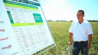 Результаты опытов фунгицидной защиты озимой пшеницы