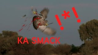 Bow Hunting Flying Dove and Pigeons 4K Slow Mo Kills