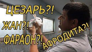 Как правильно выбрать КЛИЧКУ для кролика!