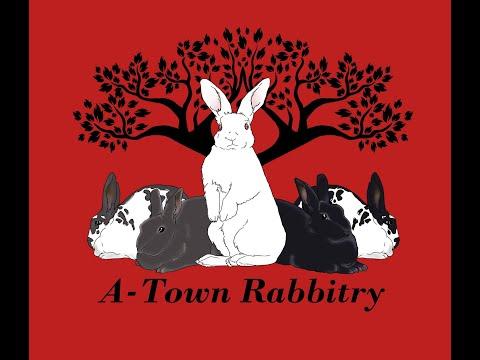 New Zealand Rabbits: Tattoos