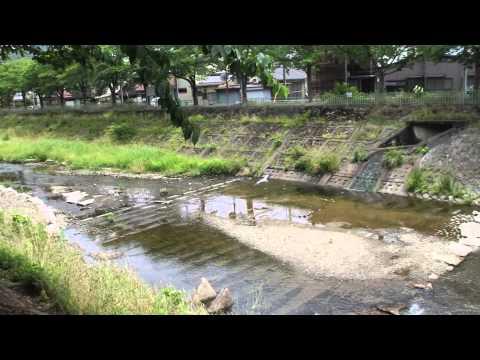 舞鶴市 与保呂川沿いの桜 2015年4月4日   by shigesic6h