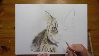 Real-time Drawing - Cat