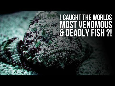 Catching The Most Venomous Fish In The World?! - The Stonefish