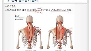 기능해부학 2. 근육움직임원리 및 목어깨, 어깨몸통근육…