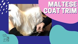 Trimming Maltese Show Dog Coat