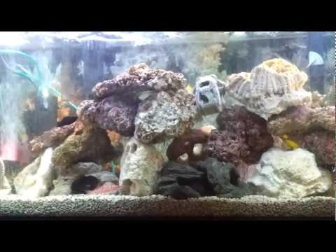 Saltwater Tank, Niger Trigger, Hawkfish, Clownfish