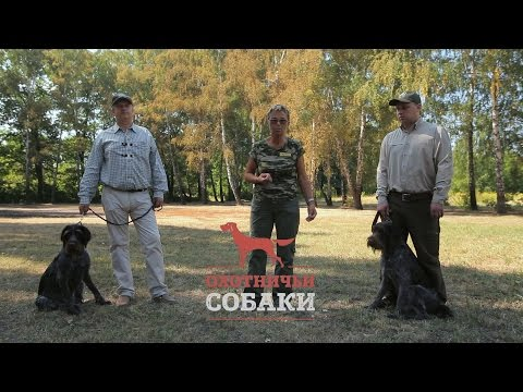 Охотничьи собаки. 2 серия. Немецкая жесткошёрстная легавая