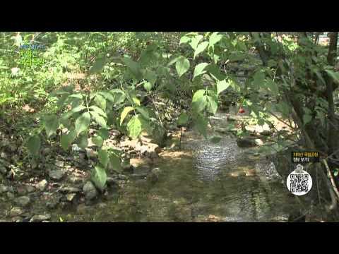 [국립공원과 함께하는 산행정보] 치악산 국립