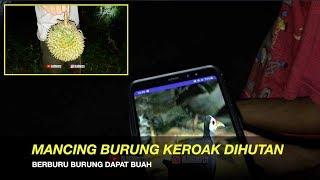 Gambar cover KE SAWAH TENGAH MALAM MANCING BURUNG KEROAK | MALAH DURIAN RUNTUH