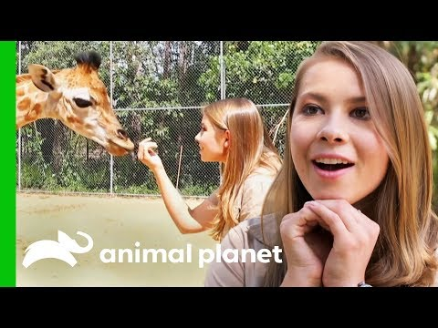 Bindi Meets Australia Zoo's Newest Baby Giraffe! | Crikey! It's The Irwins
