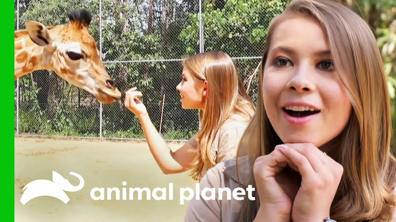 Bindi Meets Australia Zoo S Newest Baby Giraffe Crikey It S The Irwins Youtube