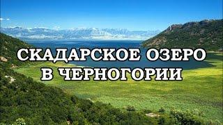 видео Скадарское озеро, Черногория