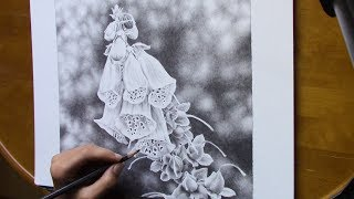 drawing a foxglove blossom with watersoluble graphite pencils