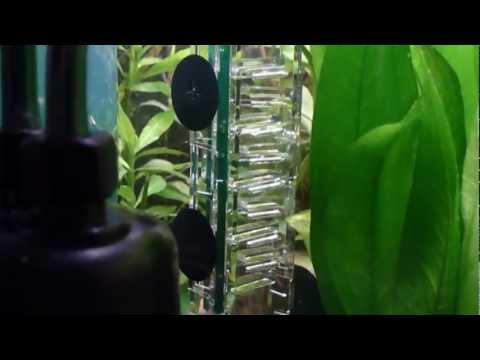 CO2 Artisanal Diffuseur MIcro-Flipper Dennerle