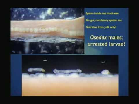 Deep-Sea Animal Diversity - Perspectives on Ocean Science