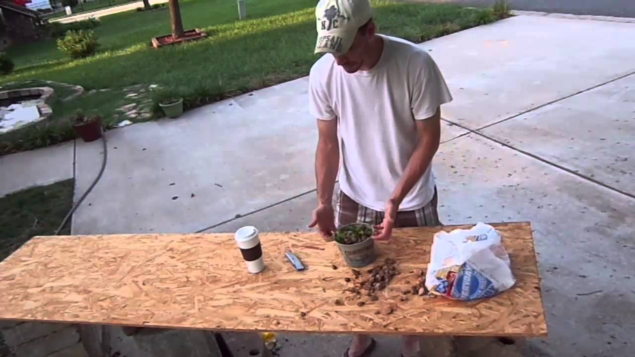 How to build a net pot for a fish pond youtube for Pond in a pot with fish
