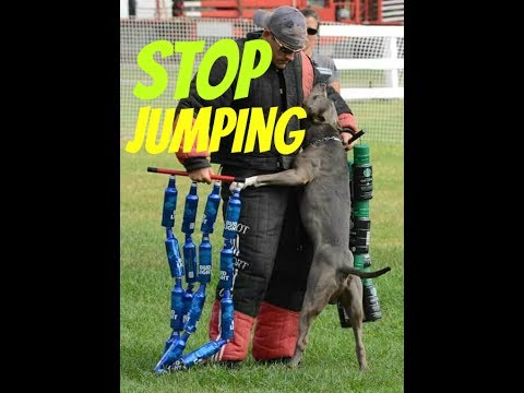 stop puppy or dog jumping training obedience pup pit bull shepherd