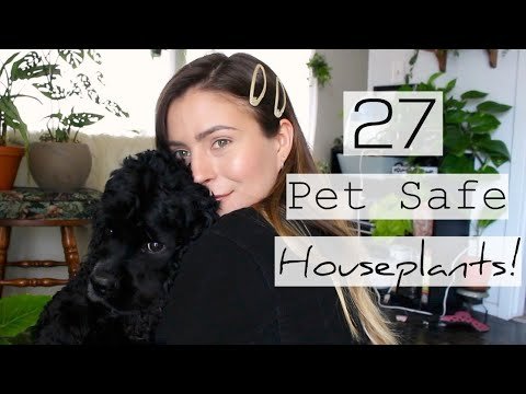 25 Non-Toxic To Pets Houseplants | Pet Friendly Indoor Plants!