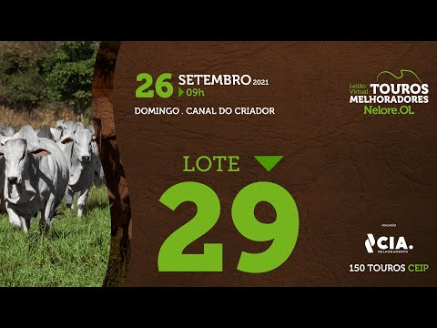 LOTE 29 - LEILÃO VIRTUAL DE TOUROS 2021 NELORE OL - CEIP